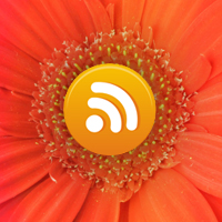 Add the WordPress RSS Feed Anywhere In Your Theme